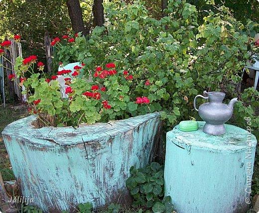 Всем моим гостям хорошего настроения! Хочу вам его, хорошего настроения, добавить. Сейчас, в конце лета, хочу показать вам свои цветники.  Что-то уже было  в моих записях. Но так хочется похвалиться тем, что сделано. Те, кто любит дачи с асфальтированными дорожками, коллекционными цветами  и красивыми садовыми фигурками, должны остановиться здесь и не смотреть  дальше. Я показываю обычный деревенский двор, с белёным домом, старыми хозяйственными постройками и самыми обычными цветами. Хочу, чтобы мои гости посмотрели, что и огромный старый деревенский двор можно сделать красивым. фото 39