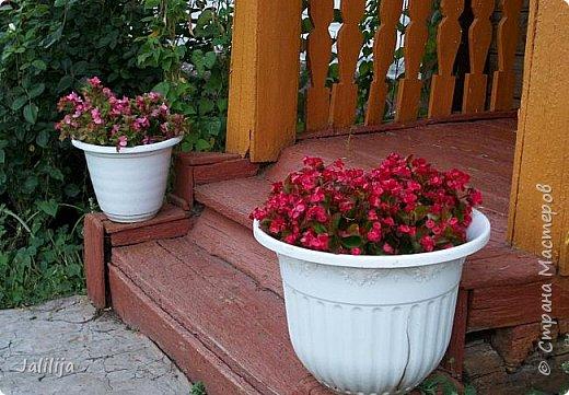 Всем моим гостям хорошего настроения! Хочу вам его, хорошего настроения, добавить. Сейчас, в конце лета, хочу показать вам свои цветники.  Что-то уже было  в моих записях. Но так хочется похвалиться тем, что сделано. Те, кто любит дачи с асфальтированными дорожками, коллекционными цветами  и красивыми садовыми фигурками, должны остановиться здесь и не смотреть  дальше. Я показываю обычный деревенский двор, с белёным домом, старыми хозяйственными постройками и самыми обычными цветами. Хочу, чтобы мои гости посмотрели, что и огромный старый деревенский двор можно сделать красивым. фото 67