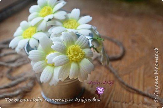 Яркость, неприхотливость, нежная красота, обильное и длительное цветение – вот основные качества, которыми привлекает ромашка. фото 2