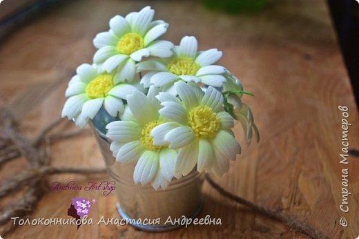 Яркость, неприхотливость, нежная красота, обильное и длительное цветение – вот основные качества, которыми привлекает ромашка. фото 1