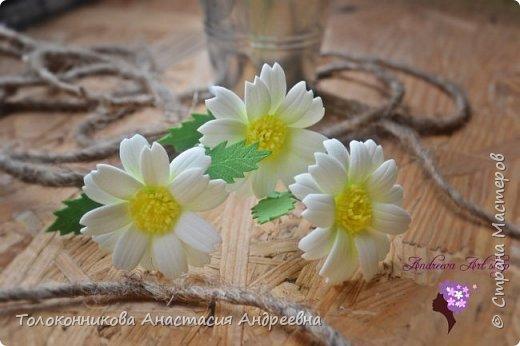 Яркость, неприхотливость, нежная красота, обильное и длительное цветение – вот основные качества, которыми привлекает ромашка. фото 3