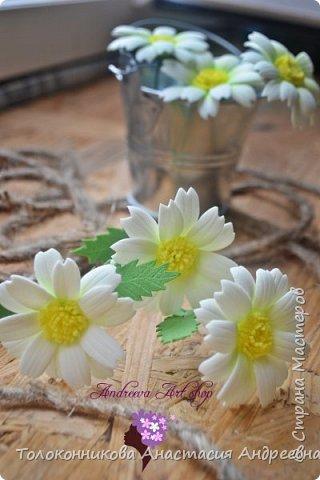 Яркость, неприхотливость, нежная красота, обильное и длительное цветение – вот основные качества, которыми привлекает ромашка. фото 4
