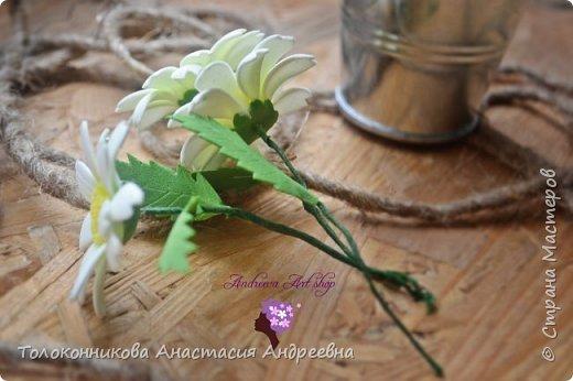 Яркость, неприхотливость, нежная красота, обильное и длительное цветение – вот основные качества, которыми привлекает ромашка. фото 5