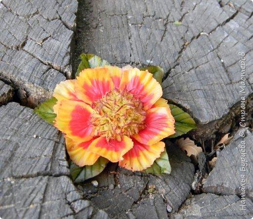 Здравствуйте! Люблю яркие, сочные цветы. Один из таких цветов- рудбекия. Разновидностей её много. Вот такими они получились в моей интерпретации)).   фото 2