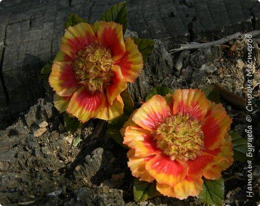 Здравствуйте! Люблю яркие, сочные цветы. Один из таких цветов- рудбекия. Разновидностей её много. Вот такими они получились в моей интерпретации)).   фото 3