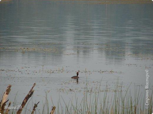 """""""С утра сидит на озере   Любитель-рыболов,  Сидит, мурлычет песенку,  А песенка без слов...  Здравствуйте, дорогие жители нашей замечательной СМ! Приглашаю ВАС на утреннюю рыбалку :) фото 11"""