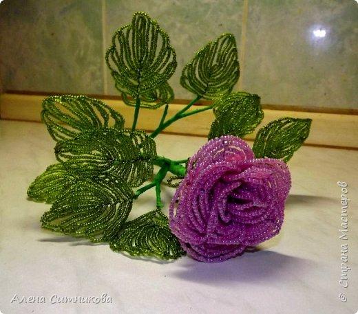 Бокаловидная роза фото 1