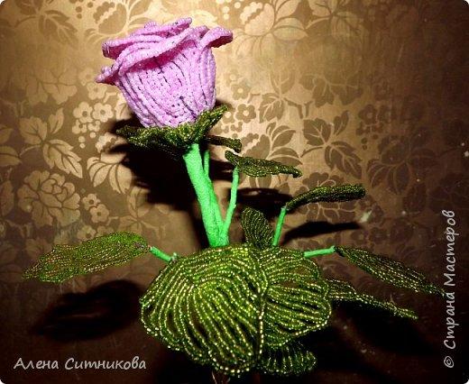 Бокаловидная роза фото 4