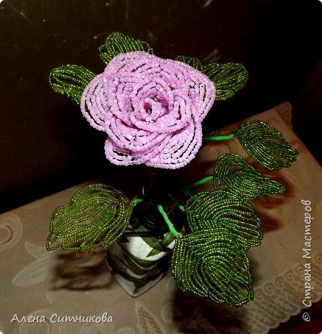 Бокаловидная роза фото 5