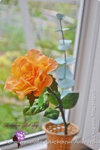 """Вот такое роза """"Персик"""" у меня получилась)) фото 1"""