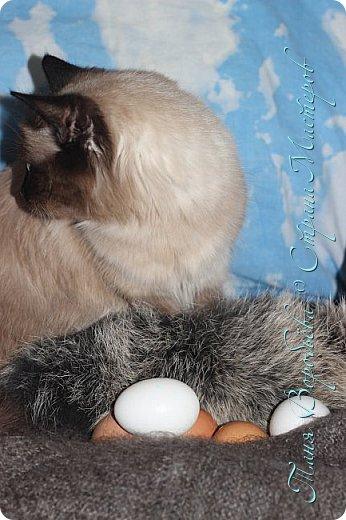 Сегодня вашему вниманию я представляю фоторепортаж с нашей кошкой Улей.  Девчонка она очень спокойная и послушная. А мы с дочкой люди творческие и креативные любим нашей Ульяне фотосессии устраивать. Это фото мои. Давно я их выложить хотела ,а тут конкурс http://stranamasterov.ru/node/1041678?tid=675 ну и вспомнила про эти фото. Итак начнем. Уля - Ммммм .Вкусно пахнет. фото 2