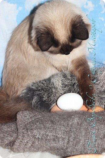 Сегодня вашему вниманию я представляю фоторепортаж с нашей кошкой Улей.  Девчонка она очень спокойная и послушная. А мы с дочкой люди творческие и креативные любим нашей Ульяне фотосессии устраивать. Это фото мои. Давно я их выложить хотела ,а тут конкурс http://stranamasterov.ru/node/1041678?tid=675 ну и вспомнила про эти фото. Итак начнем. Уля - Ммммм .Вкусно пахнет. фото 4