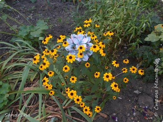 кусудама Kiyoko- Flaviane Koti и Passiflora фото 5