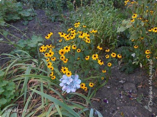 кусудама Kiyoko- Flaviane Koti и Passiflora фото 4