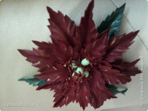 цветочки фото 7