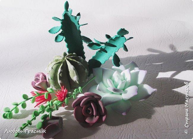 Суккуленты и кактусы из фома фото 2