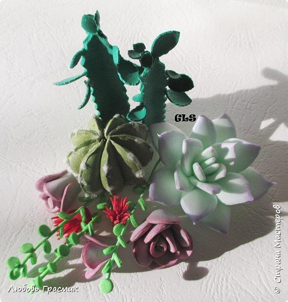 Суккуленты и кактусы из фома фото 8