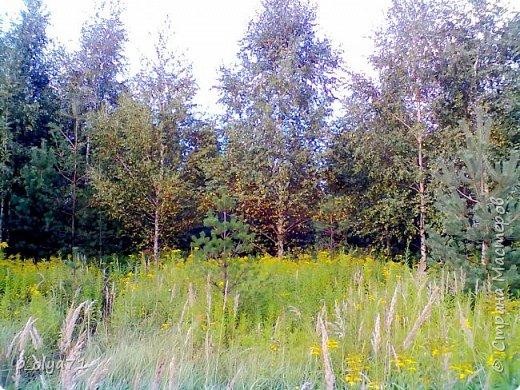 Здравствуйте!!!  Каждое время года хорошо по-своему.. Лето радует нас пестротой, разнообразием красок.. Вот я и любуюсь,любуюсь и любуюсь!..))) Хочу и с вами поделиться частичкой красоты,которую нам дарит природа!  Спасибо ей! фото 48