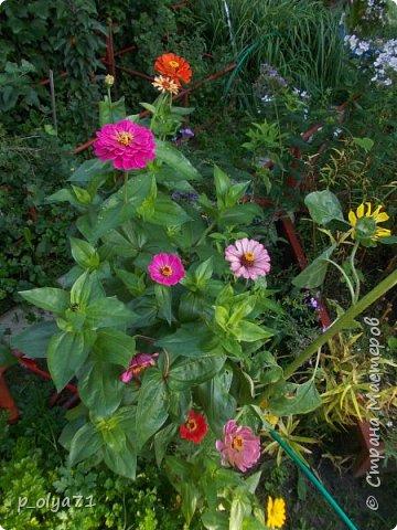 Здравствуйте!!!  Каждое время года хорошо по-своему.. Лето радует нас пестротой, разнообразием красок.. Вот я и любуюсь,любуюсь и любуюсь!..))) Хочу и с вами поделиться частичкой красоты,которую нам дарит природа!  Спасибо ей! фото 42
