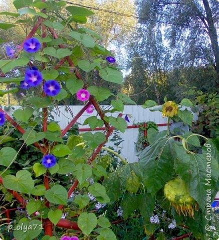 Здравствуйте!!!  Каждое время года хорошо по-своему.. Лето радует нас пестротой, разнообразием красок.. Вот я и любуюсь,любуюсь и любуюсь!..))) Хочу и с вами поделиться частичкой красоты,которую нам дарит природа!  Спасибо ей! фото 40