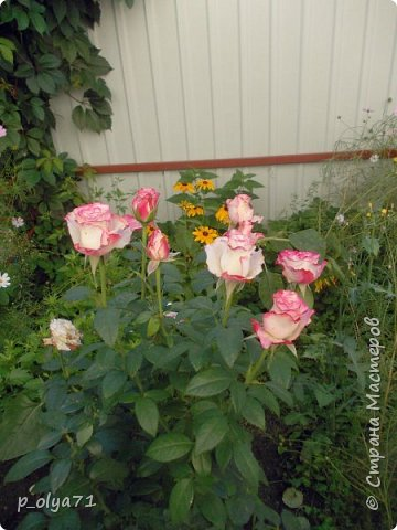 Здравствуйте!!!  Каждое время года хорошо по-своему.. Лето радует нас пестротой, разнообразием красок.. Вот я и любуюсь,любуюсь и любуюсь!..))) Хочу и с вами поделиться частичкой красоты,которую нам дарит природа!  Спасибо ей! фото 45