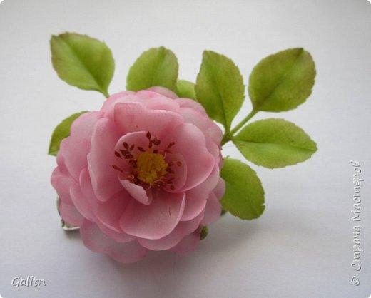 Всем привет!     Кадупул (Королева ночи) — уникальный цветок островов Шри-Ланки. Путешественники и туристы со всех концов света приезжают на эти острова, чтобы посмотреть на этот восхитительный цветок, имеющий свою легенду. Говорят, что в ночь, когда эти цветы распускаются, на землю спускаются мифические существа, полубоги со змеиным туловищем (Наги), чтобы сорвать самый прекрасный цветок в мире и преподнести его в дар Будде.   фото 6