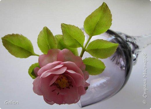 Всем привет!     Кадупул (Королева ночи) — уникальный цветок островов Шри-Ланки. Путешественники и туристы со всех концов света приезжают на эти острова, чтобы посмотреть на этот восхитительный цветок, имеющий свою легенду. Говорят, что в ночь, когда эти цветы распускаются, на землю спускаются мифические существа, полубоги со змеиным туловищем (Наги), чтобы сорвать самый прекрасный цветок в мире и преподнести его в дар Будде.   фото 8