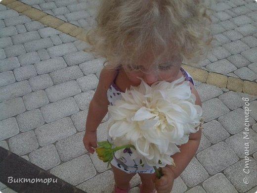 Доброго времени суток дорогие жители СМ. Хочется поделится красотой которая растет в моем пока еще маленьком саду :-) Начну со своих любимчиков , красавиц и королев сада георгин . Это героина макси, моя любимая. А посередине мой главный младший цветочек :-) и по совместительству главный цветовод :-) фото 3
