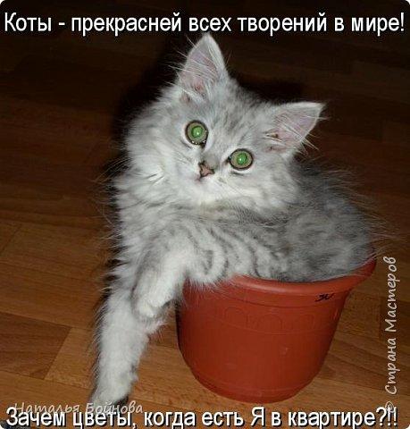 А у вас нет кота??? Кого ж вы любите тогда!!! Всем заглянувшим, желаю хорошего настроения :) фото 3