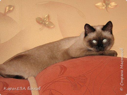 Здравствуйте! Хочу рассказать вам про мою любимую кошку. Её зовут Моника. Сегодня ей исполняется 9 лет, поэтому в честь дня рождения такой блог. Вот таким очаровательным котёнком попала Моня к нам в дом. Она с детства любила кататься в коляске как все маленькие дети. фото 21
