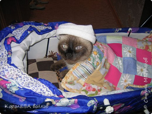 Здравствуйте! Хочу рассказать вам про мою любимую кошку. Её зовут Моника. Сегодня ей исполняется 9 лет, поэтому в честь дня рождения такой блог. Вот таким очаровательным котёнком попала Моня к нам в дом. Она с детства любила кататься в коляске как все маленькие дети. фото 2