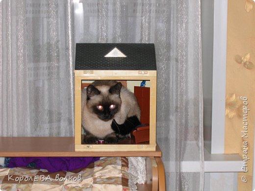 Здравствуйте! Хочу рассказать вам про мою любимую кошку. Её зовут Моника. Сегодня ей исполняется 9 лет, поэтому в честь дня рождения такой блог. Вот таким очаровательным котёнком попала Моня к нам в дом. Она с детства любила кататься в коляске как все маленькие дети. фото 4