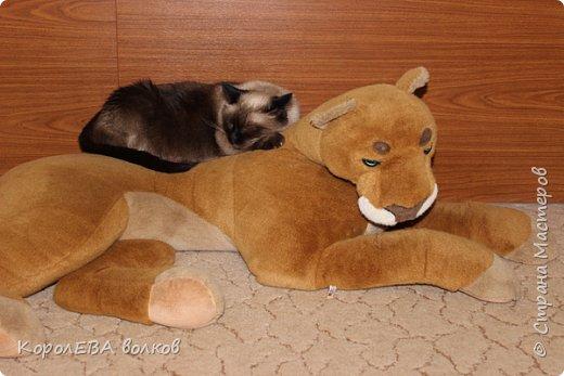 Здравствуйте! Хочу рассказать вам про мою любимую кошку. Её зовут Моника. Сегодня ей исполняется 9 лет, поэтому в честь дня рождения такой блог. Вот таким очаровательным котёнком попала Моня к нам в дом. Она с детства любила кататься в коляске как все маленькие дети. фото 20