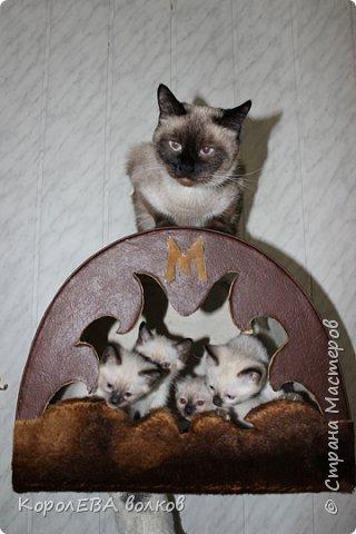 Здравствуйте! Хочу рассказать вам про мою любимую кошку. Её зовут Моника. Сегодня ей исполняется 9 лет, поэтому в честь дня рождения такой блог. Вот таким очаровательным котёнком попала Моня к нам в дом. Она с детства любила кататься в коляске как все маленькие дети. фото 14
