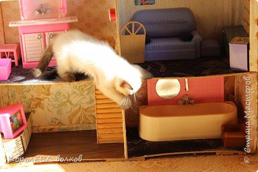 Здравствуйте! Хочу рассказать вам про мою любимую кошку. Её зовут Моника. Сегодня ей исполняется 9 лет, поэтому в честь дня рождения такой блог. Вот таким очаровательным котёнком попала Моня к нам в дом. Она с детства любила кататься в коляске как все маленькие дети. фото 17