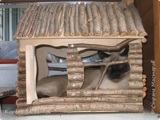 Здравствуйте! Хочу рассказать вам про мою любимую кошку. Её зовут Моника. Сегодня ей исполняется 9 лет, поэтому в честь дня рождения такой блог. Вот таким очаровательным котёнком попала Моня к нам в дом. Она с детства любила кататься в коляске как все маленькие дети. фото 3