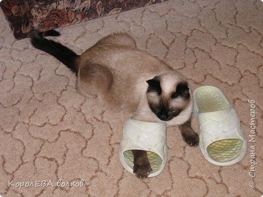 Здравствуйте! Хочу рассказать вам про мою любимую кошку. Её зовут Моника. Сегодня ей исполняется 9 лет, поэтому в честь дня рождения такой блог. Вот таким очаровательным котёнком попала Моня к нам в дом. Она с детства любила кататься в коляске как все маленькие дети. фото 6