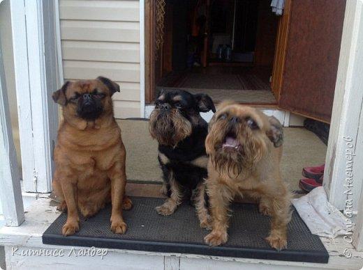 """Все доброго Последнего Дня Лета! Сегодня я сдаю работу на интересный конкурс фотографий """"Домашние любимцы"""" http://stranamasterov.ru/node/1041678 и - соответствуя условиям конкурса - показываю вам своих любимых собак и их фото.  Фоток много, собак четыре. Так что вот... фото 1"""