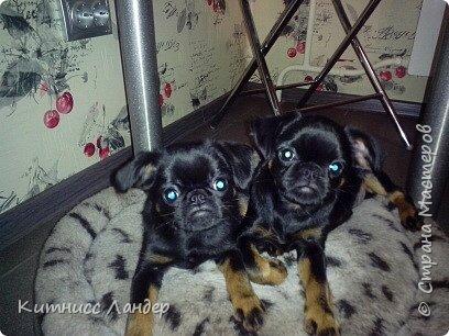 """Все доброго Последнего Дня Лета! Сегодня я сдаю работу на интересный конкурс фотографий """"Домашние любимцы"""" http://stranamasterov.ru/node/1041678 и - соответствуя условиям конкурса - показываю вам своих любимых собак и их фото.  Фоток много, собак четыре. Так что вот... фото 18"""