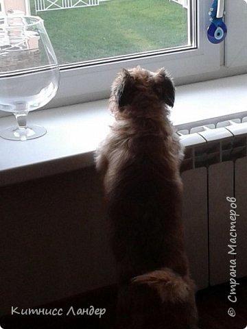 """Все доброго Последнего Дня Лета! Сегодня я сдаю работу на интересный конкурс фотографий """"Домашние любимцы"""" http://stranamasterov.ru/node/1041678 и - соответствуя условиям конкурса - показываю вам своих любимых собак и их фото.  Фоток много, собак четыре. Так что вот... фото 7"""