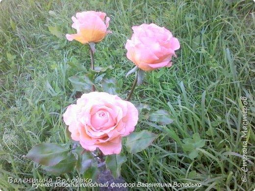 Добрый день мастера и мастерицы!!!!У меня новые розы!!!! фото 2