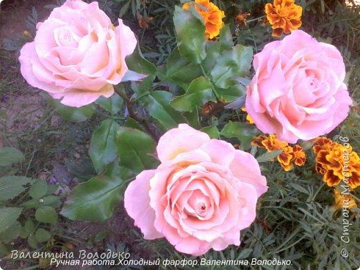 Добрый день мастера и мастерицы!!!!У меня новые розы!!!! фото 5