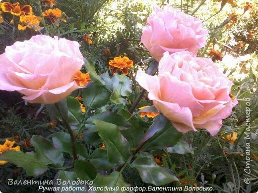 Добрый день мастера и мастерицы!!!!У меня новые розы!!!! фото 1