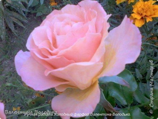 Добрый день мастера и мастерицы!!!!У меня новые розы!!!! фото 4