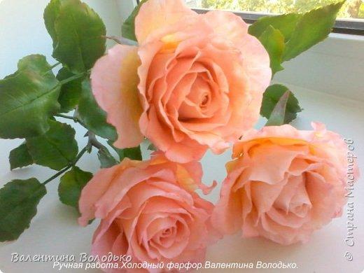 Добрый день мастера и мастерицы!!!!У меня новые розы!!!! фото 6