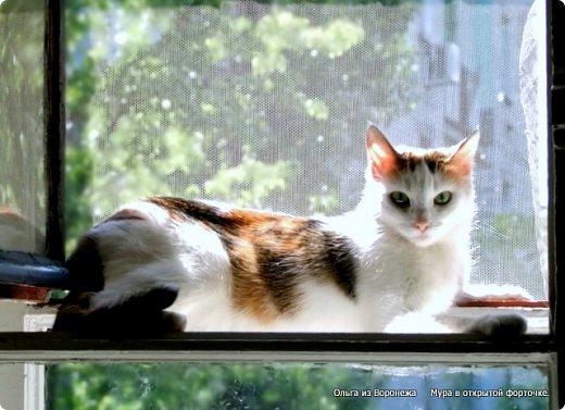 Так сложилось - в наш дом попали в разное время кошки одной масти - трёхцветные. фото 1
