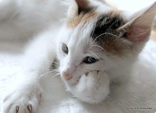 Так сложилось - в наш дом попали в разное время кошки одной масти - трёхцветные. фото 3