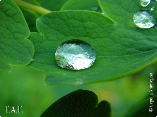 Вы полюбуйтесь разве не диво? – В капле воды отражение Мира!  Витальева Л. фото 17