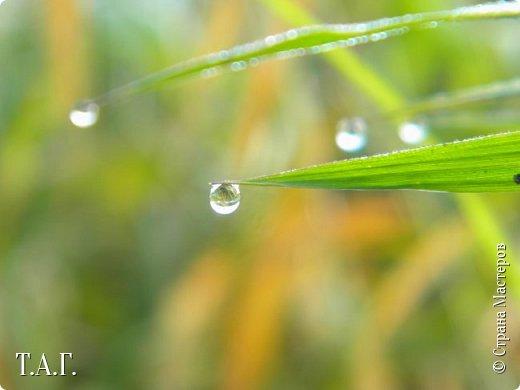 Вы полюбуйтесь разве не диво? – В капле воды отражение Мира!  Витальева Л. фото 21