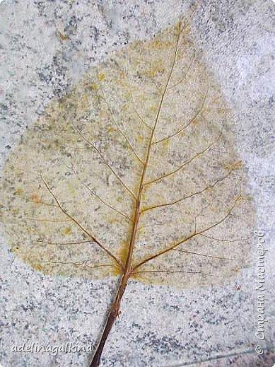 Скелетирование листьев Для скелетирования листьев необходимо. Посуда для кипячения листьев, мне удобнее всего была стекляная. Стекляная доска 2 губки: мягкая и жёсткая порошок  «Rohrfrei» бумага для выпечки перчатки листья фото 4